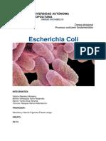 E. Coli (1).docx