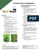 Stemborer Fact Sheet