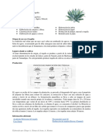 Ficha Asparagaceae
