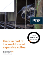 Civets True Cost of the Worlds Most Expensive Coffee (1)