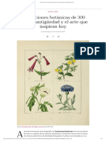 La historia de las ilustraciones botánicas y por qué siguen siendo populares hoy