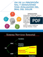 Fisiologia Percepcion Sensorial