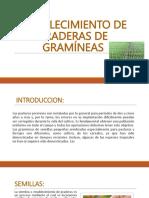 ESTABLECIMIENTO DE PRADERAS DE GRAMÍNEAS.pptx