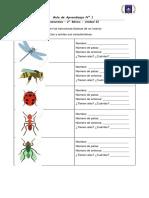 Guía n° 1 insectos clase 3