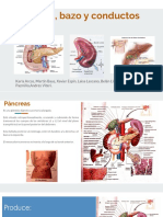 pancreas,bazo,cv.pptx