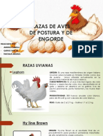 Razas de Aves de Postura y de Engorde
