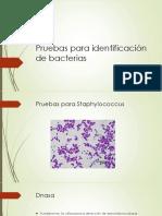 Pruebas de Identificacion Microbiologica