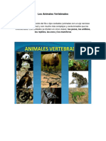Los Animales Vertebrados Y VERTEBRADOS