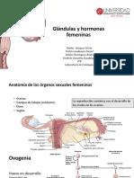Hormonas Femeninas (2)