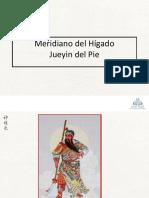 24_Meridiano Del Higado Jueyin Del Pie