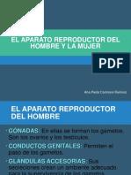 Aparato Reproductor Del Hombre y La Mujer