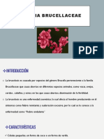 Expo Brucellacea