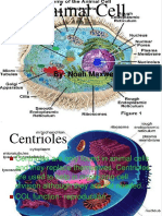 Animall_cell_powerpoint-090223150816-phpapp02.ppt