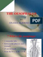 7358660 the Oesophagus