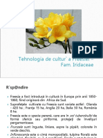 freesia.ppt
