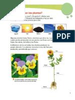 Naturaleza las Plantas
