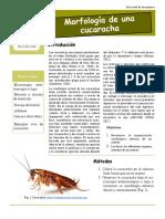 Diseccion de Cucaracha