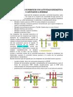 Receptores Con Actividad Enzimática