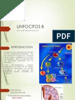 LINFOCITOS B.pptx