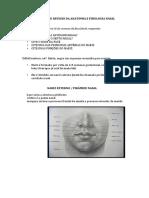 esquema revisão anatomia nasal