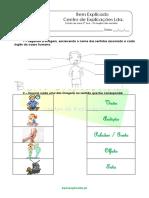 A.3.1. Ficha de trabalho - Os órgãos dos sentidos (1).docx