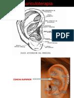 Acupuntura Auricular e Auriculoterapia