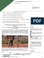 7 pasos para poner una montura a un caballo correctamente.pdf
