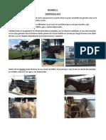 INFORME agropecruz.docx