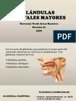 Glándulas Salivales Mayores