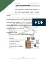 Tema 6. Sistema Endocrino 10