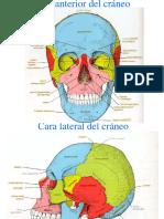 Cráneo Total 2018