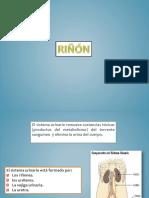 110154553-rinon.pptx