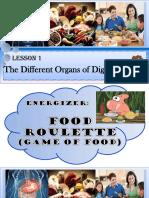 Digestive System Organs ppt