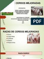 Razas de Cerdos Mejoradas - Modificado