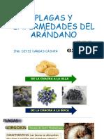 PLAGAS Y ENFERMEDADES DEL ARÁNDANO-unasam.pdf