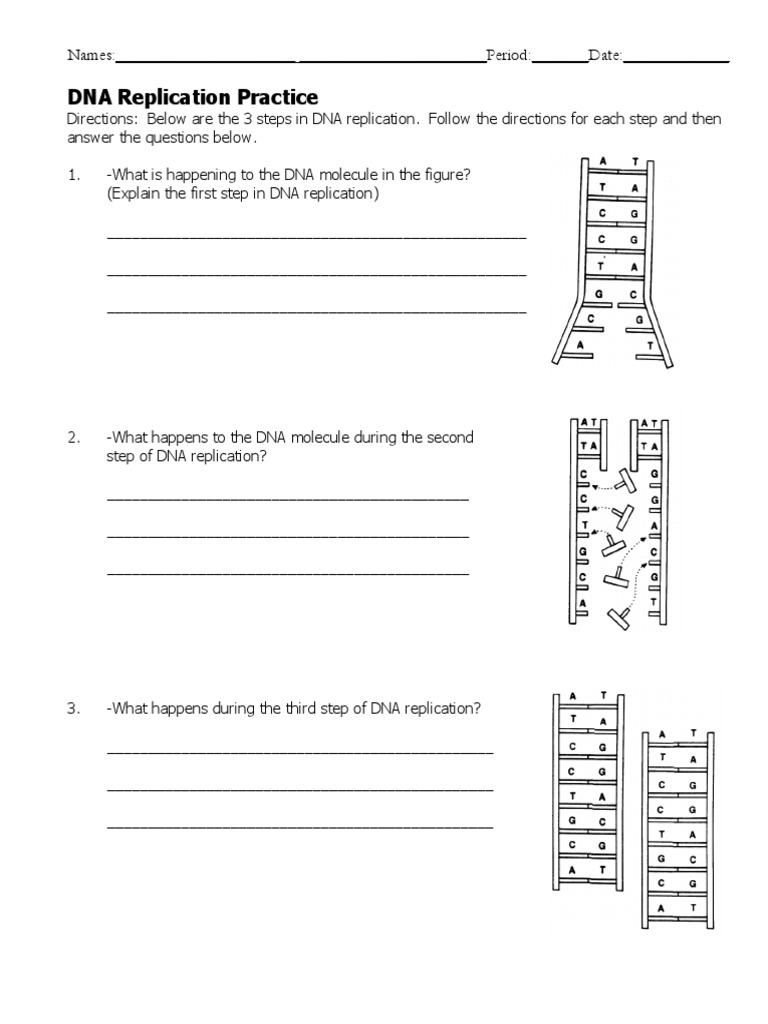 Dna Replication Worksheet Dna Replication Dna [ 1024 x 768 Pixel ]
