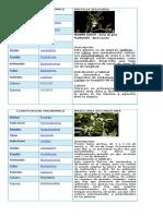 255978527 Clasificacion Taxonomica de Las Orquideas