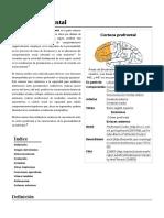 Corteza Prefrontal