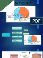Cabeza y Cuello Embriología