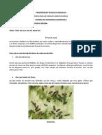 Venacion de Los Insectos