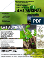 LAS AUXINAS - Última Exposición Agrícola
