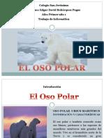 Presentacion Oso Polar