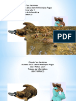 ornitorrico presentacion