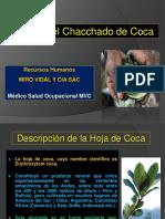 Efectos Del Chacchado de Coca