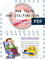 Human Teeth and Its Functions