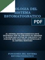 Fisiologia Del Sistema Estomatognatico