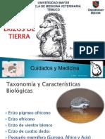 Erizo de Tierra, Dr .Miguel Ángel Mansilla