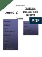 Clase Tubo digestivo completa + glandulas anexas para PDF