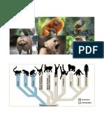 primates.docx