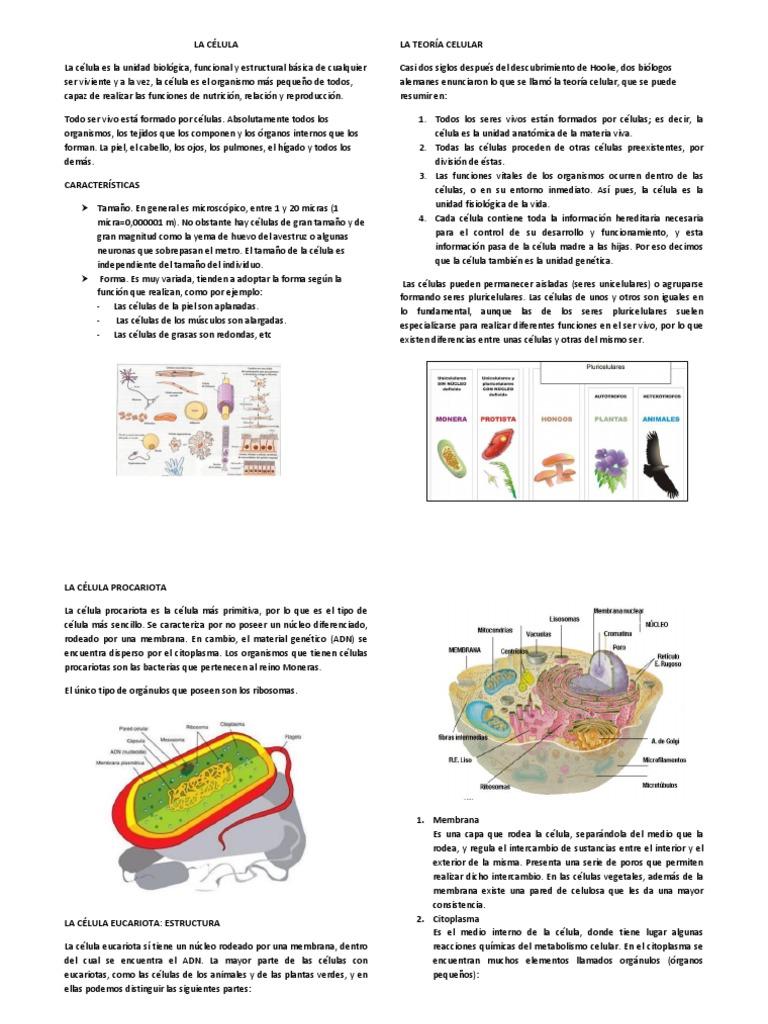 La Célula Citoplasma Célula Biología